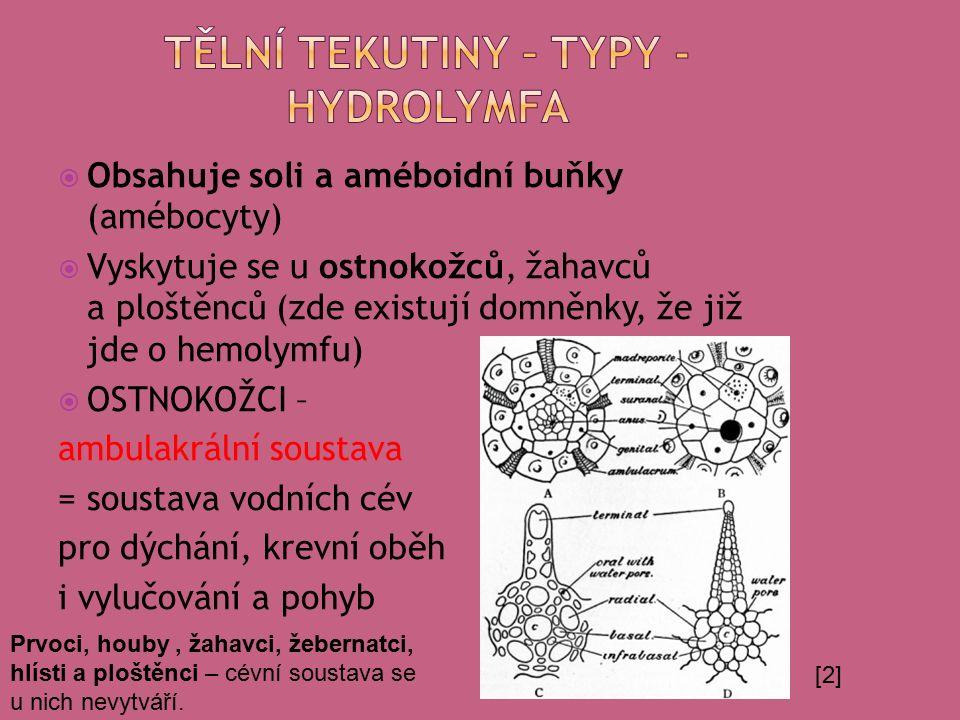  Obsahuje soli a améboidní buňky (amébocyty)  Vyskytuje se u ostnokožců, žahavců a ploštěnců (zde existují domněnky, že již jde o hemolymfu)  OSTNOKOŽCI – ambulakrální soustava = soustava vodních cév pro dýchání, krevní oběh i vylučování a pohyb [2] Prvoci, houby, žahavci, žebernatci, hlísti a ploštěnci – cévní soustava se u nich nevytváří.