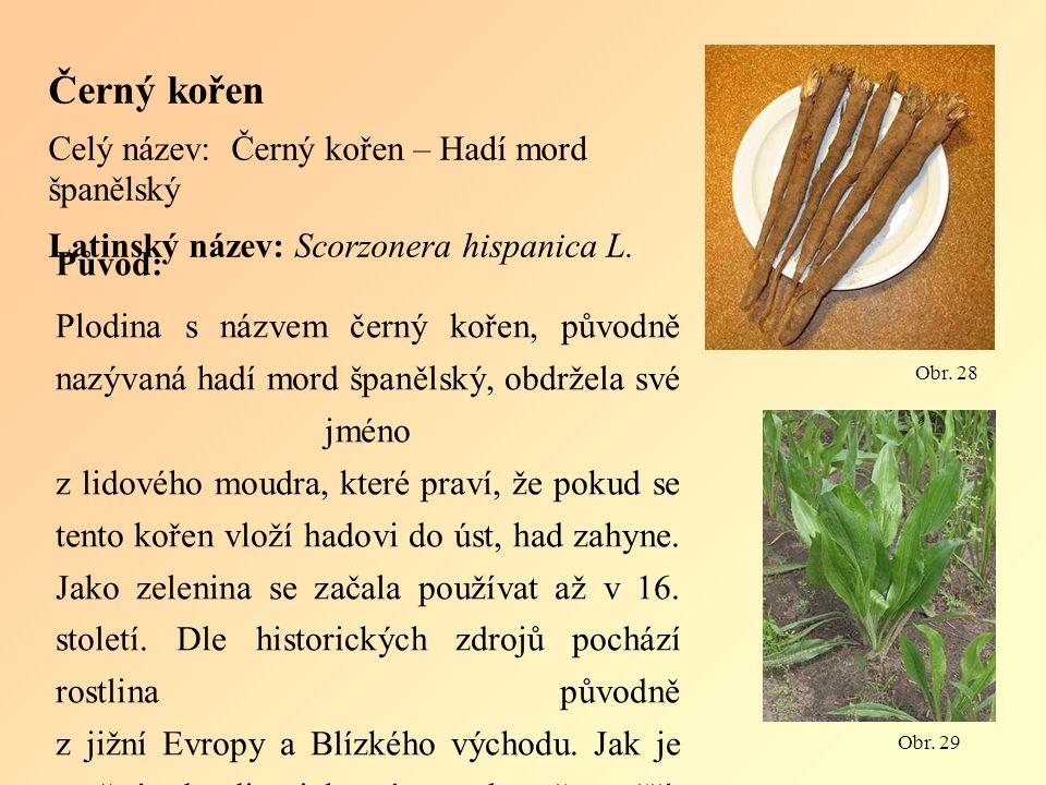 Černý kořen Celý název: Černý kořen – Hadí mord španělský Latinský název: Scorzonera hispanica L.