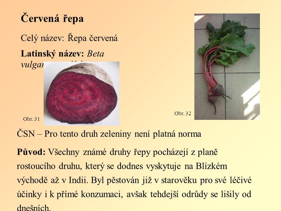 Červená řepa Celý název: Řepa červená Latinský název: Beta vulgaris var.