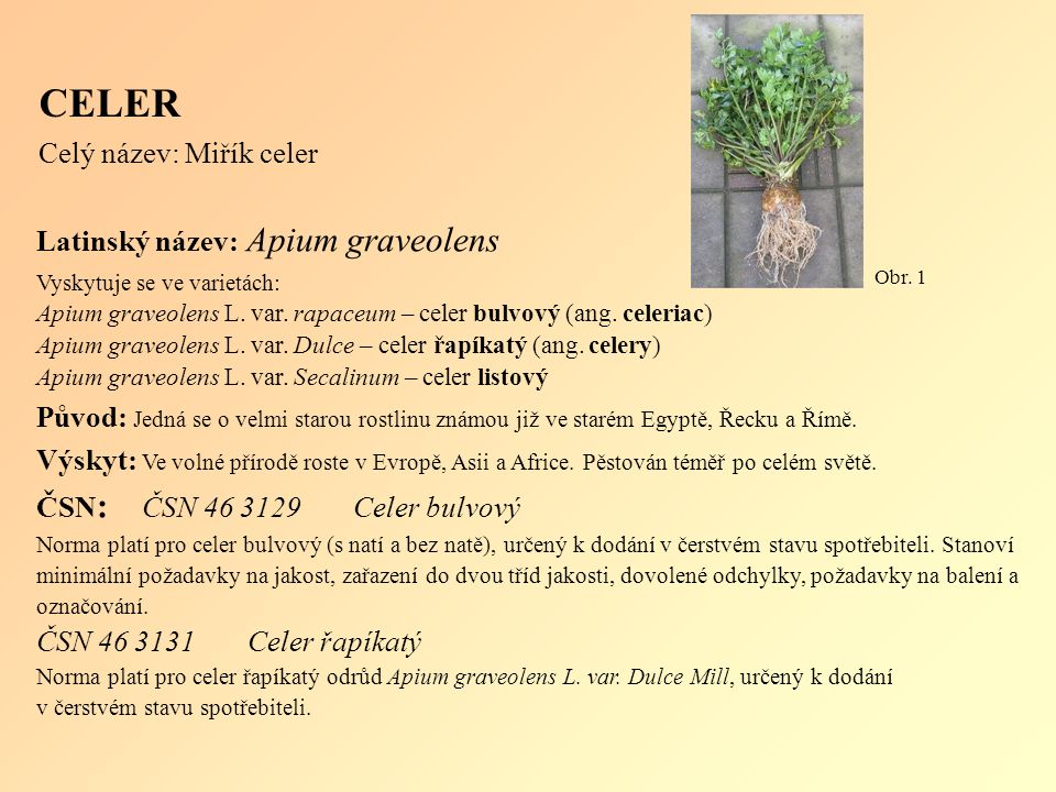 Latinský název: Apium graveolens Vyskytuje se ve varietách: Apium graveolens L.