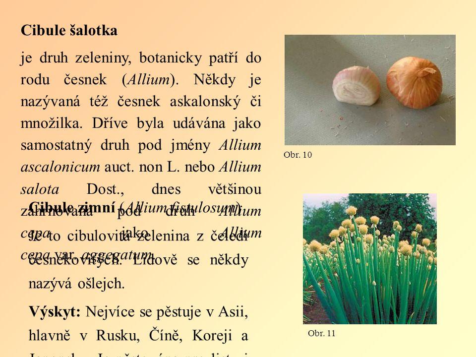 Cibule šalotka je druh zeleniny, botanicky patří do rodu česnek (Allium).