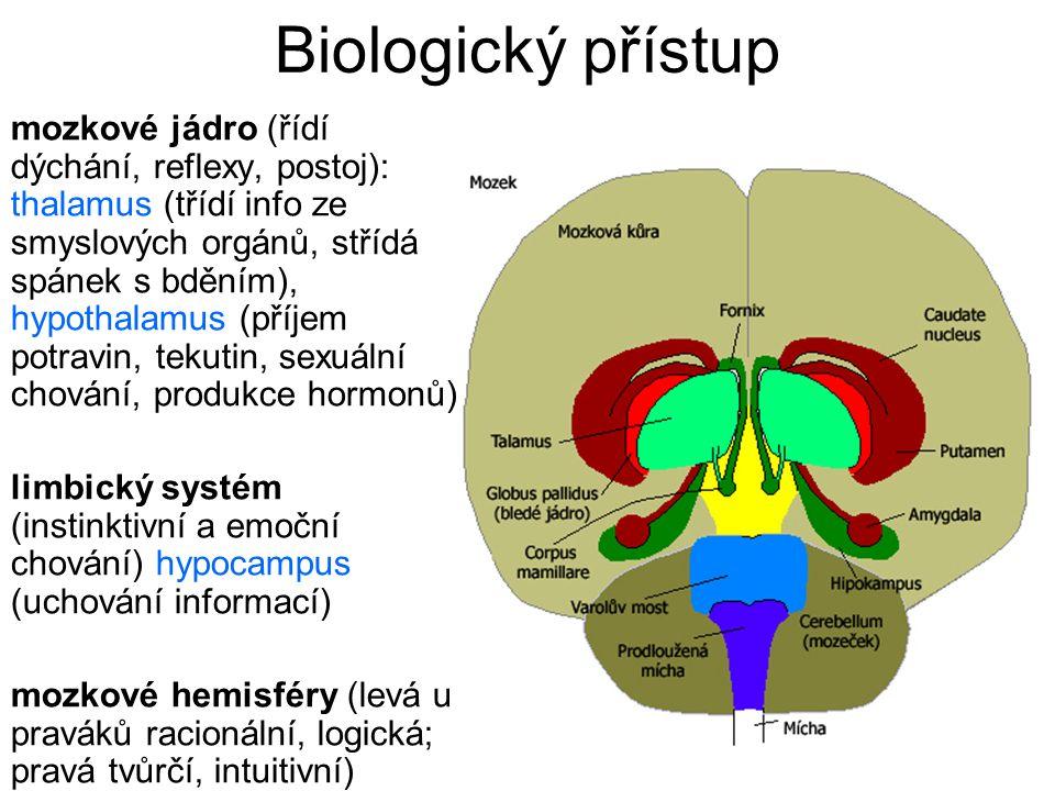 mozkové jádro (řídí dýchání, reflexy, postoj): thalamus (třídí info ze smyslových orgánů, střídá spánek s bděním), hypothalamus (příjem potravin, teku