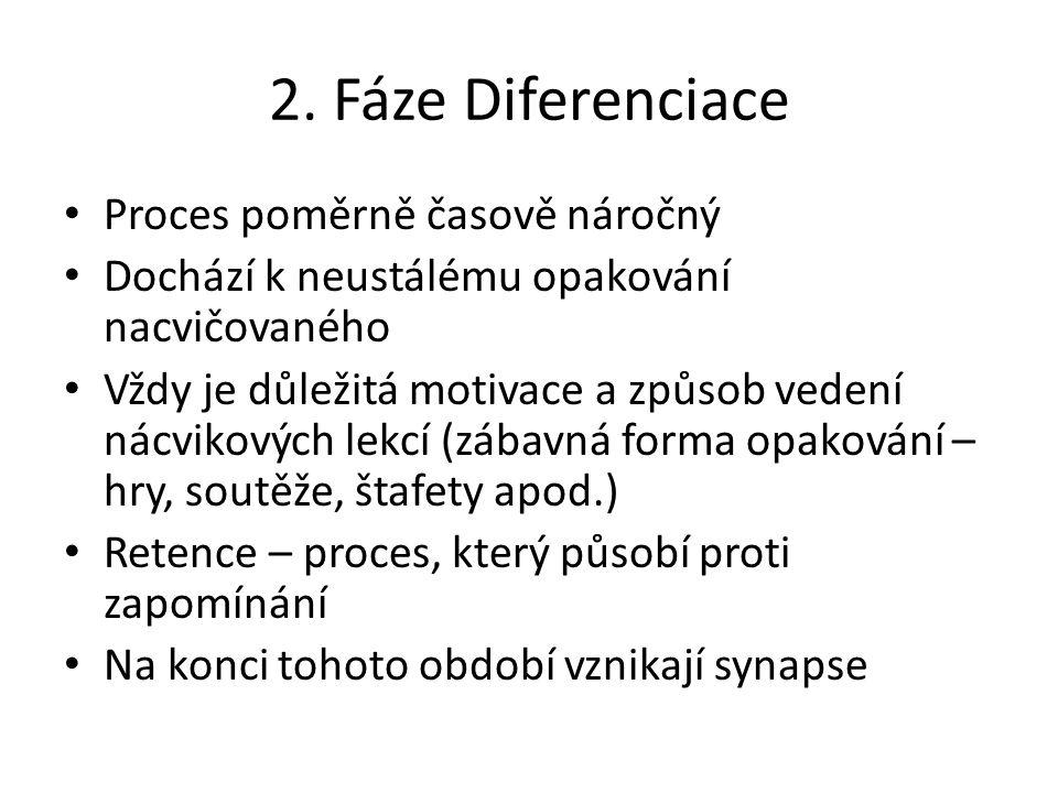 2. Fáze Diferenciace Proces poměrně časově náročný Dochází k neustálému opakování nacvičovaného Vždy je důležitá motivace a způsob vedení nácvikových