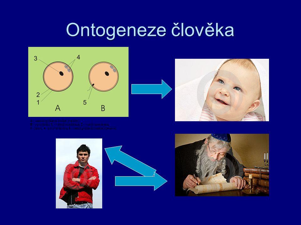 Fylogeneze - psych.