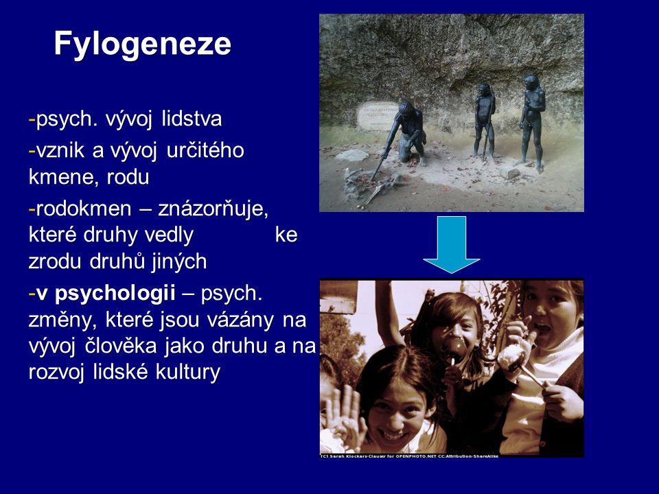 Fylogeneze - psych. vývoj lidstva - vznik a vývoj určitého kmene, rodu - rodokmen – znázorňuje, které druhy vedly ke zrodu druhů jiných - v psychologi