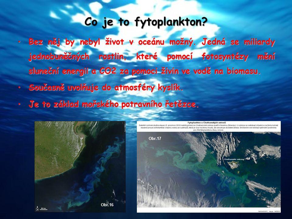 Co je to fytoplankton? Bez něj by nebyl život v oceánu možný. Jedná se miliardy jednobuněčných rostlin, které pomocí fotosyntézy mění sluneční energii