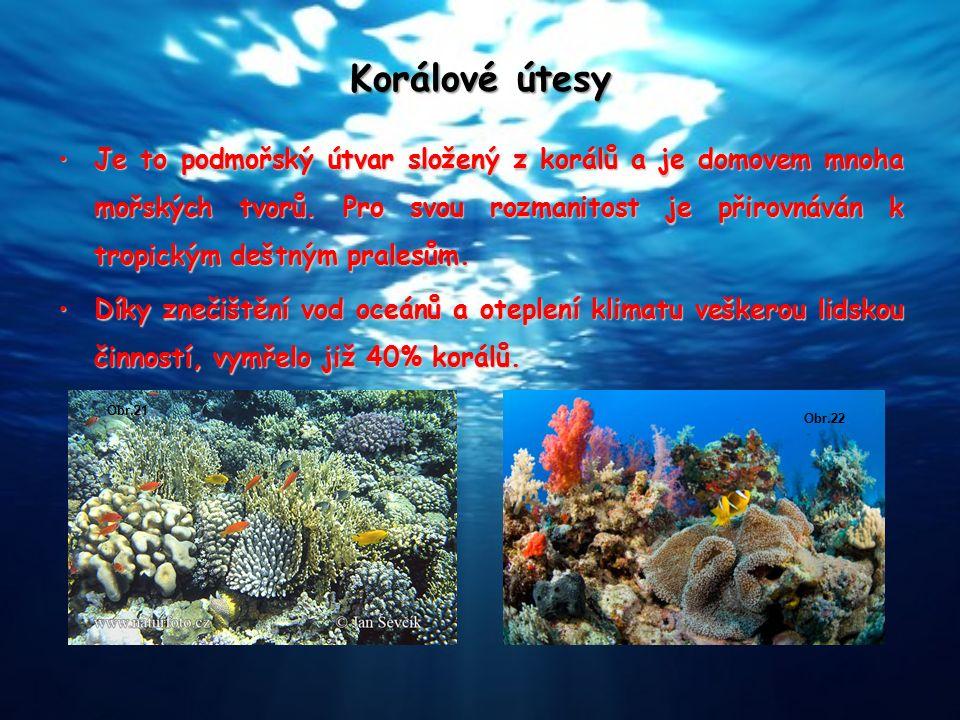 Korálové útesy Je to podmořský útvar složený z korálů a je domovem mnoha mořských tvorů. Pro svou rozmanitost je přirovnáván k tropickým deštným prale