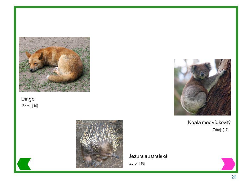 20 Dingo Zdroj: [16] Koala medvídkovitý Zdroj: [17] Ježura australská Zdroj: [18]