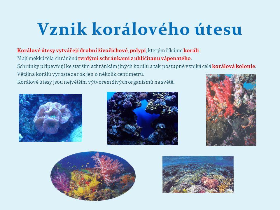 Korálové útesy vytvářejí drobní živočichové, polypi, kterým říkáme koráli.