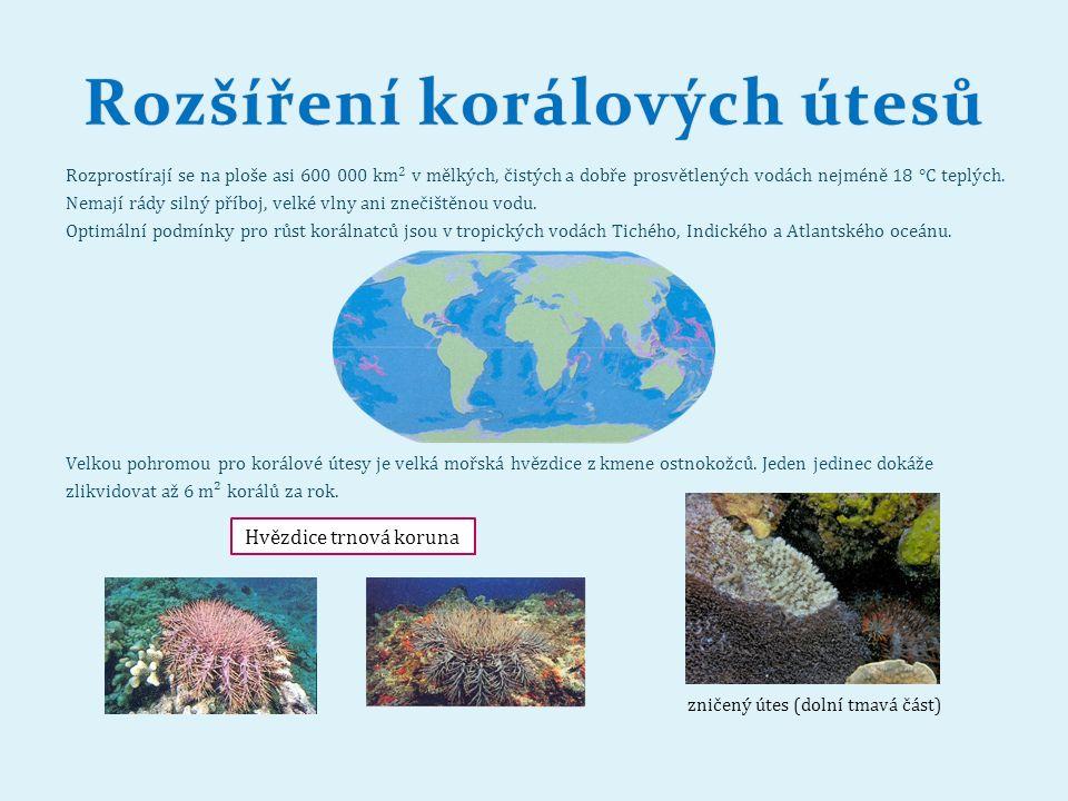 Rozšíření korálových útesůRozšíření korálových útesů Rozprostírají se na ploše asi 600 000 km 2 v mělkých, čistých a dobře prosvětlených vodách nejméně 18 °C teplých.