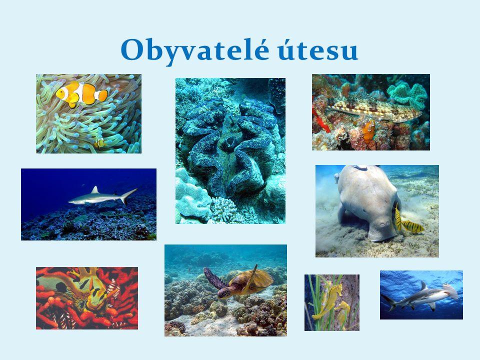 Doplň text: ………………………………………… typ korálového ostrova.........................................................