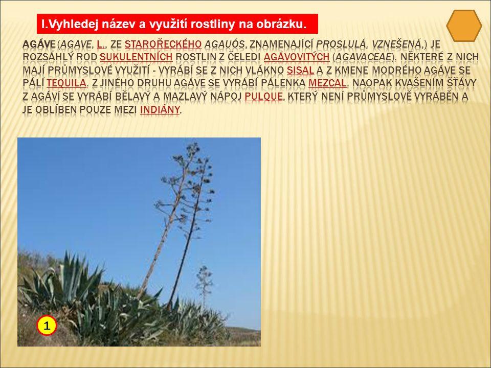 I.Vyhledej název a využití rostliny na obrázku. 1