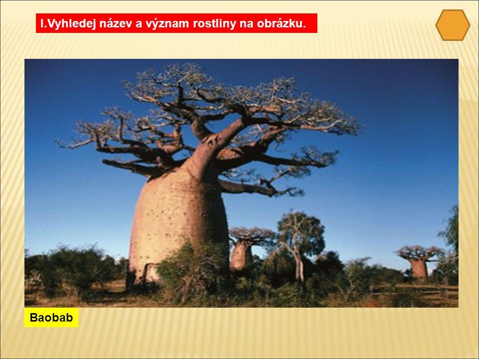 Baobab I.Vyhledej název a význam rostliny na obrázku.