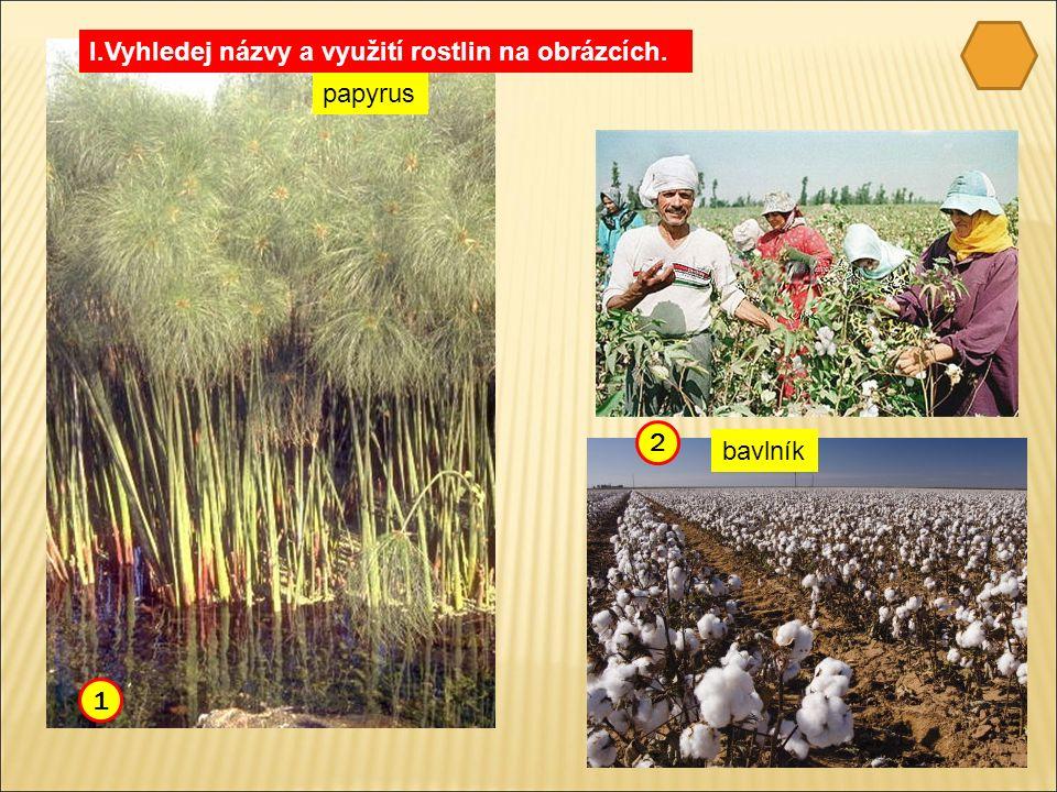 papyrus bavlník I.Vyhledej názvy a využití rostlin na obrázcích. 1 2