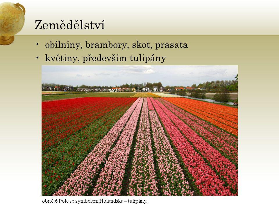 Zemědělství obilniny, brambory, skot, prasata květiny, především tulipány obr.č.6 Pole se symbolem Holandska – tulipány.