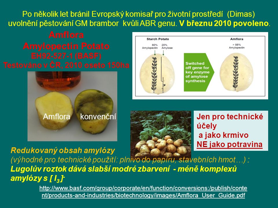 Amflora Amylopectin Potato EH92-527-1 (BASF) Testováno v ČR, 2010 oseto 150ha Redukovaný obsah amylózy (výhodné pro technické použití: plnivo do papíru, stavebních hmot…) : Lugolův roztok dává slabší modré zbarvení - méně komplexů amylózy s [ I 3 ] - Jen pro technické účely a jako krmivo NE jako potravina http://www.basf.com/group/corporate/en/function/conversions:/publish/conte nt/products-and-industries/biotechnology/images/Amflora_User_Guide.pdf Amflora konvenční Po několik let bránil Evropský komisař pro životní prostředí (Dimas) uvolnění pěstování GM brambor kvůli ABR genu.