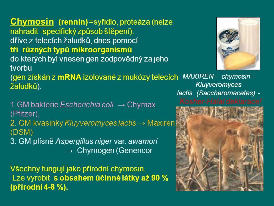 MAXIREN- chymosin - Kluyveromyces lactis (Saccharomacetes) - Kosher-Halal deklarace.