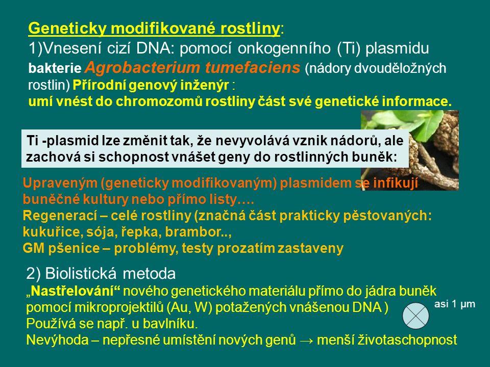 Geneticky modifikované rostliny: 1)Vnesení cizí DNA: pomocí onkogenního (Ti) plasmidu bakterie Agrobacterium tumefaciens (nádory dvouděložných rostlin) Přírodní genový inženýr : umí vnést do chromozomů rostliny část své genetické informace.