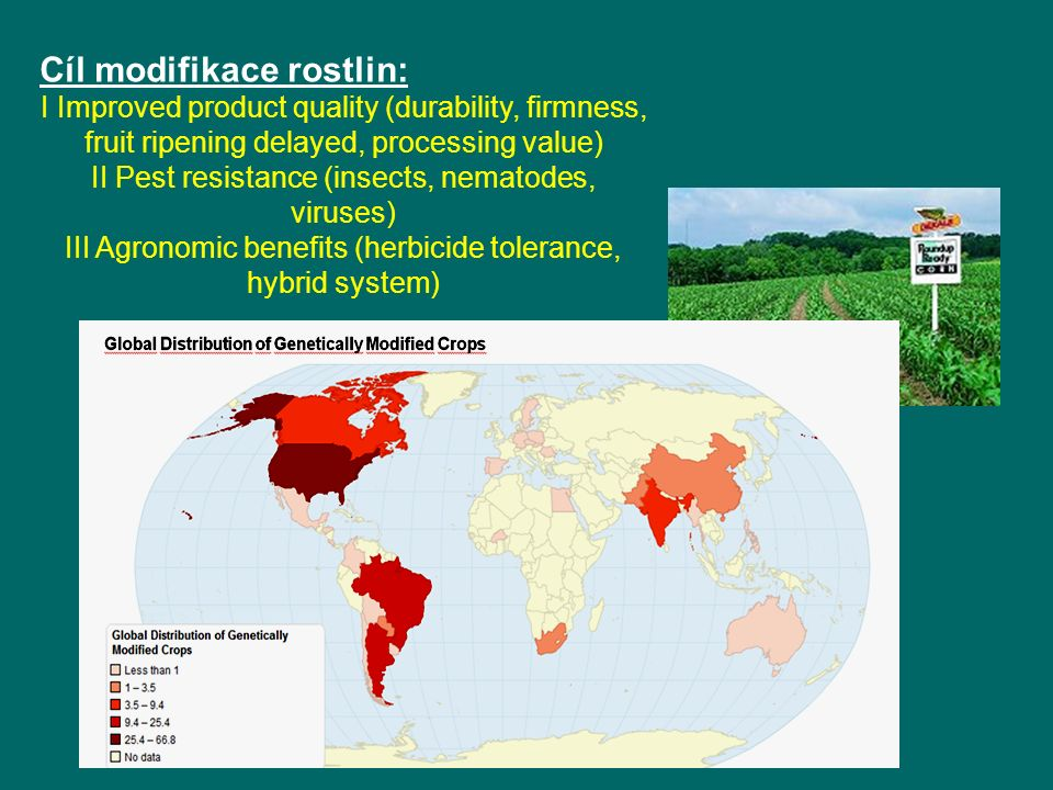 Cíl modifikace rostlin: I Improved product quality (durability, firmness, fruit ripening delayed, processing value) II Pest resistance (insects, nemat