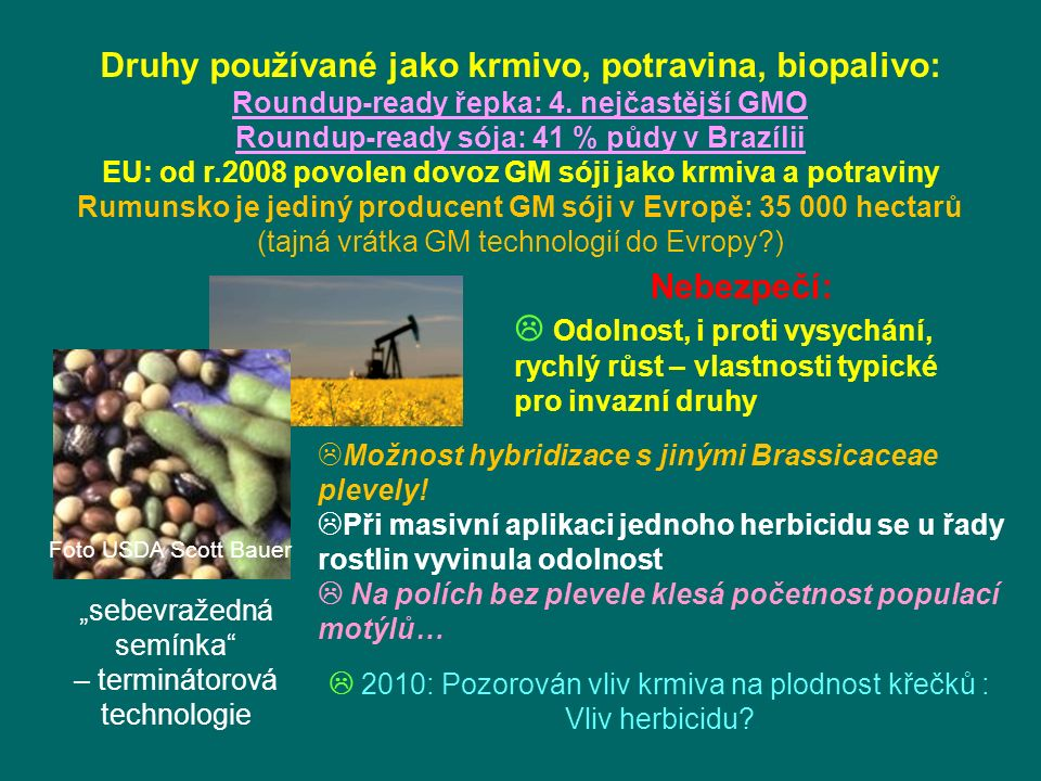 Druhy používané jako krmivo, potravina, biopalivo: Roundup-ready řepka: 4.
