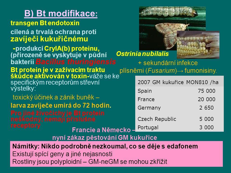 B) Bt modifikace : transgen Bt endotoxin cílená a trvalá ochrana proti zavíječi kukuřičnému - produkcí CrylA(b) proteinu, (přirozeně se vyskytuje v půdní bakterii Bacillus thuringiensis Bt protein je v zažívacím traktu škůdce aktivován v toxin-váže se ke specifickým receptorům střevní výstelky: toxický účinek a zánik buněk – larva zavíječe umírá do 72 hodin.