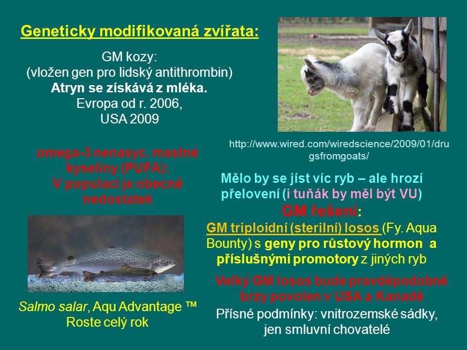 Geneticky modifikovaná zvířata: omega-3 nenasyc.