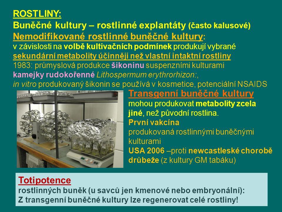ROSTLINY: Buněčné kultury – rostlinné explantáty (často kalusové) Nemodifikované rostlinné buněčné kultury : v závislosti na volbě kultivačních podmínek produkují vybrané sekundární metabolity účinněji než vlastní intaktní rostliny 1983: průmyslová produkce šikoninu suspenzními kulturami kamejky rudokořenné Lithospermum erythrorhizon:, in vitro produkovaný šikonin se používá v kosmetice, potenciální NSAIDS Transgenní buněčné kultury mohou produkovat metabolity zcela jiné, než původní rostlina.
