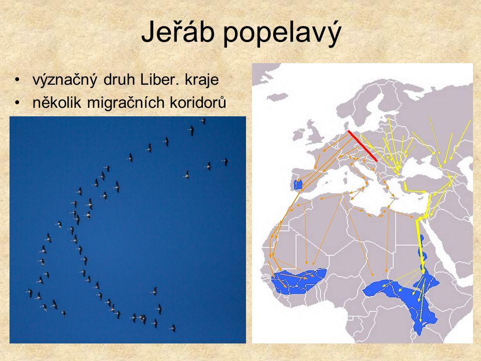Jeřáb popelavý význačný druh Liber. kraje několik migračních koridorů