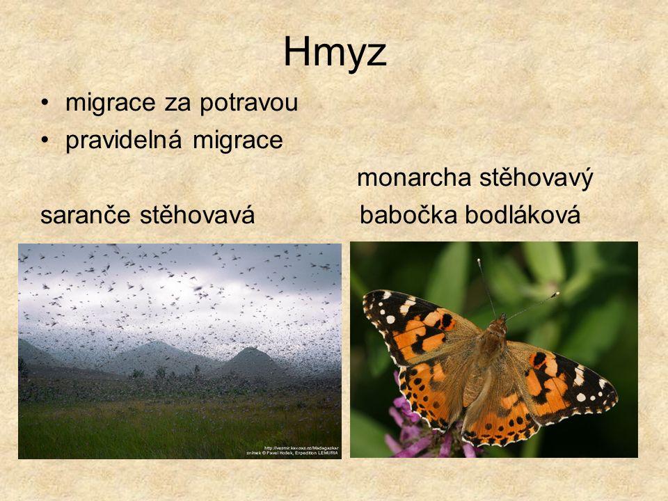 Hmyz migrace za potravou pravidelná migrace monarcha stěhovavý saranče stěhovavá babočka bodláková