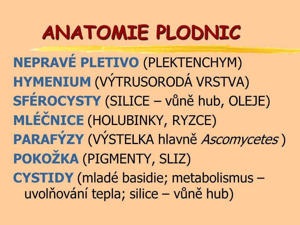 ANATOMIE PLODNIC NEPRAVÉ PLETIVO (PLEKTENCHYM) HYMENIUM (VÝTRUSORODÁ VRSTVA) SFÉROCYSTY (SILICE – vůně hub, OLEJE) MLÉČNICE (HOLUBINKY, RYZCE) PARAFÝZY (VÝSTELKA hlavně Ascomycetes ) POKOŽKA (PIGMENTY, SLIZ) CYSTIDY (mladé basidie; metabolismus – uvolňování tepla; silice – vůně hub)