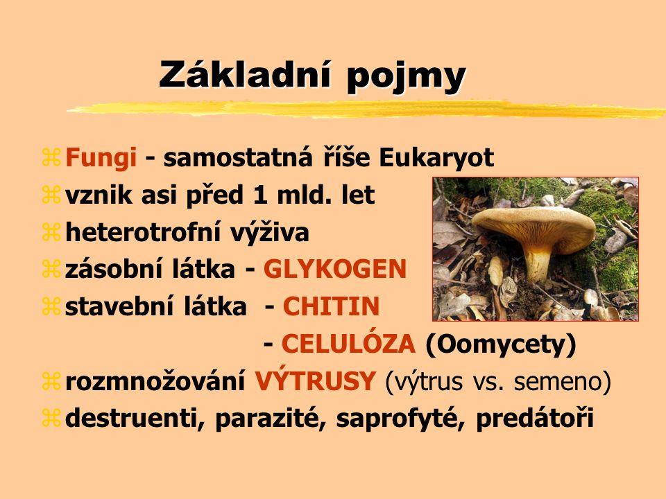 Houby - historie a současnost zPotrava (mimo středověk) zRituály (halucinogeny) zLéčitelství zSystematické zařazení k rostlinám (C.