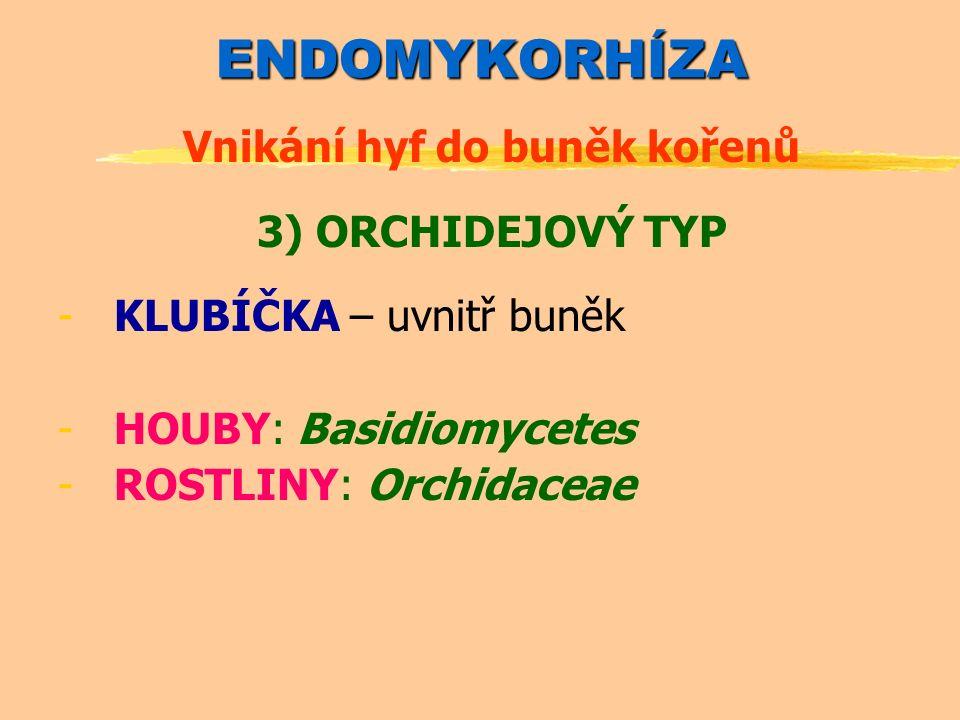 ENDOMYKORHÍZA Vnikání hyf do buněk kořenů 3) ORCHIDEJOVÝ TYP -KLUBÍČKA – uvnitř buněk -HOUBY: Basidiomycetes -ROSTLINY: Orchidaceae