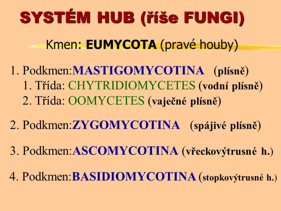 Morfologie hub z1-buněčné» mnohobuněčné (kvasinky) (hyfy) z1 až mnohojaderné buňky zHYFYa) MYCELIUM (podhoubí; výživa) b) PLODNICE (rozmnožování) zspojení hyf v ANASTOMÓZY