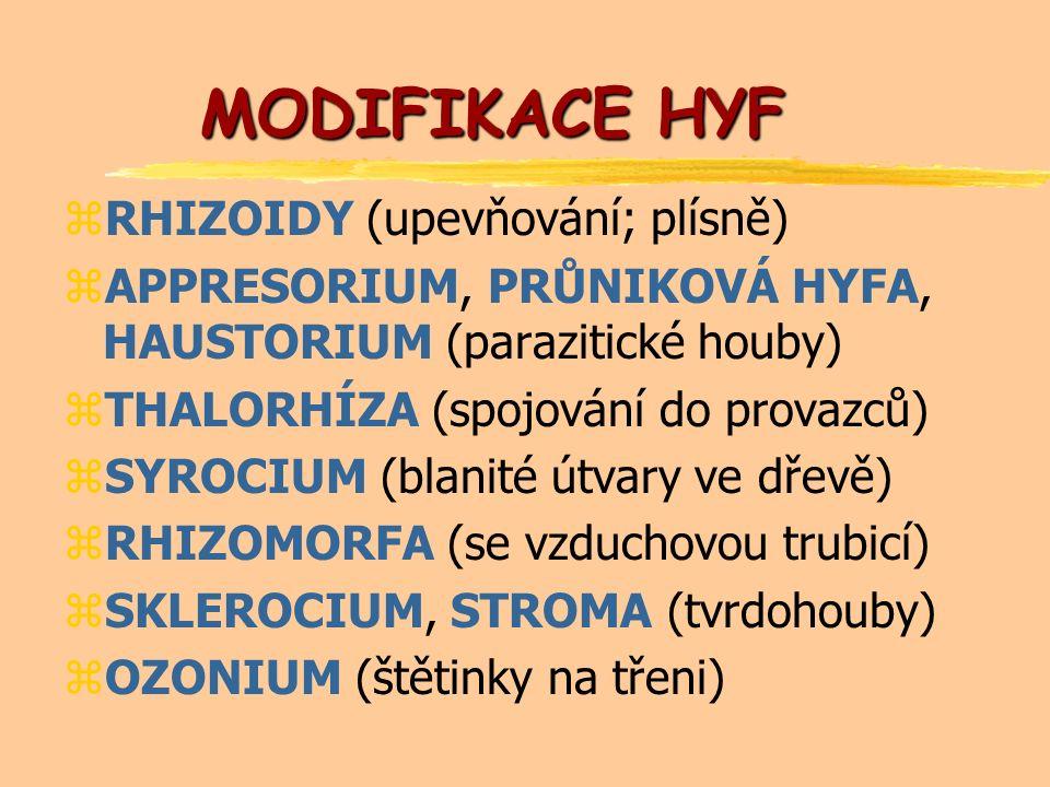 MODIFIKACE HYF zRHIZOIDY (upevňování; plísně) zAPPRESORIUM, PRŮNIKOVÁ HYFA, HAUSTORIUM (parazitické houby) zTHALORHÍZA (spojování do provazců) zSYROCIUM (blanité útvary ve dřevě) zRHIZOMORFA (se vzduchovou trubicí) zSKLEROCIUM, STROMA (tvrdohouby) zOZONIUM (štětinky na třeni)