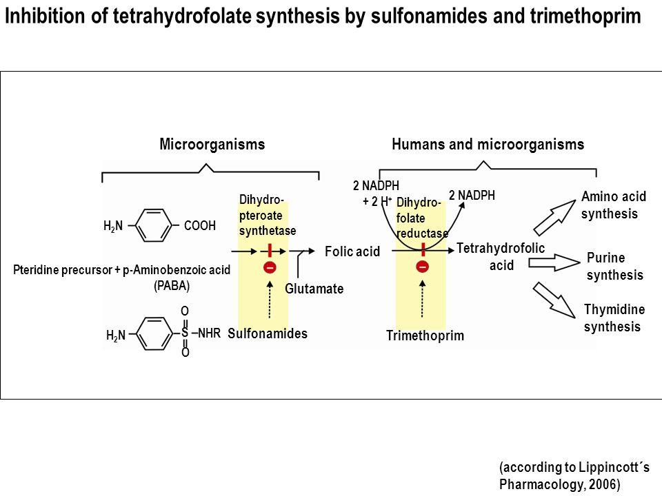 Inhibition of tetrahydrofolate synthesis by sulfonamides and trimethoprim (according to Lippincott´s Pharmacology, 2006) Pteridine precursor + p-Amino