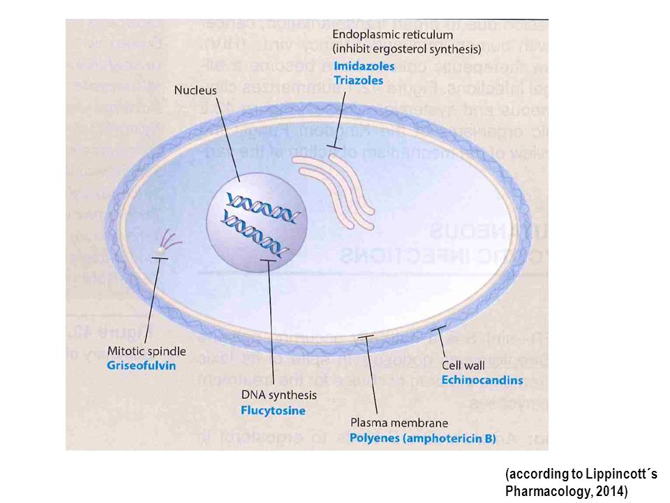 (according to Lippincott´s Pharmacology, 2014)
