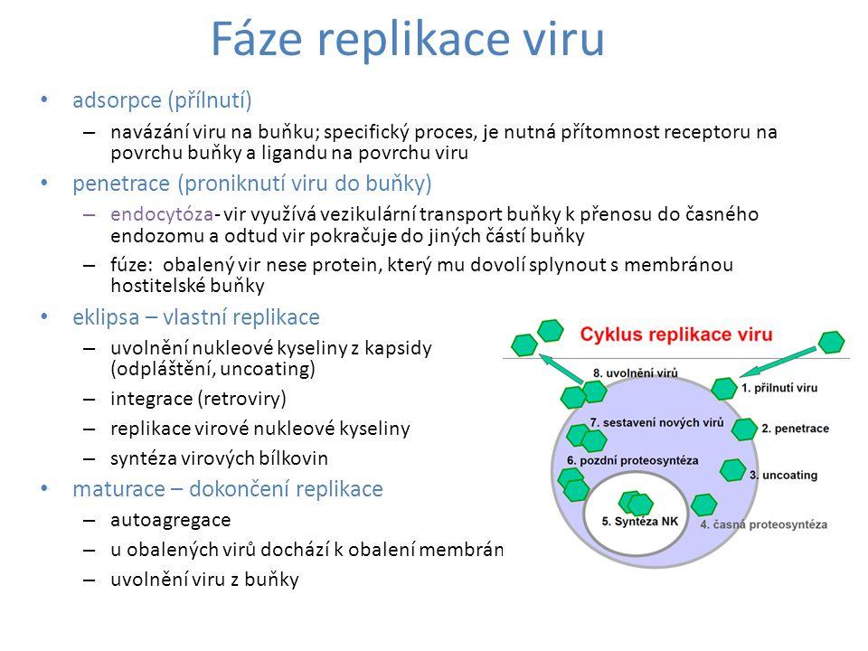 Fáze replikace viru adsorpce (přílnutí) – navázání viru na buňku; specifický proces, je nutná přítomnost receptoru na povrchu buňky a ligandu na povrc