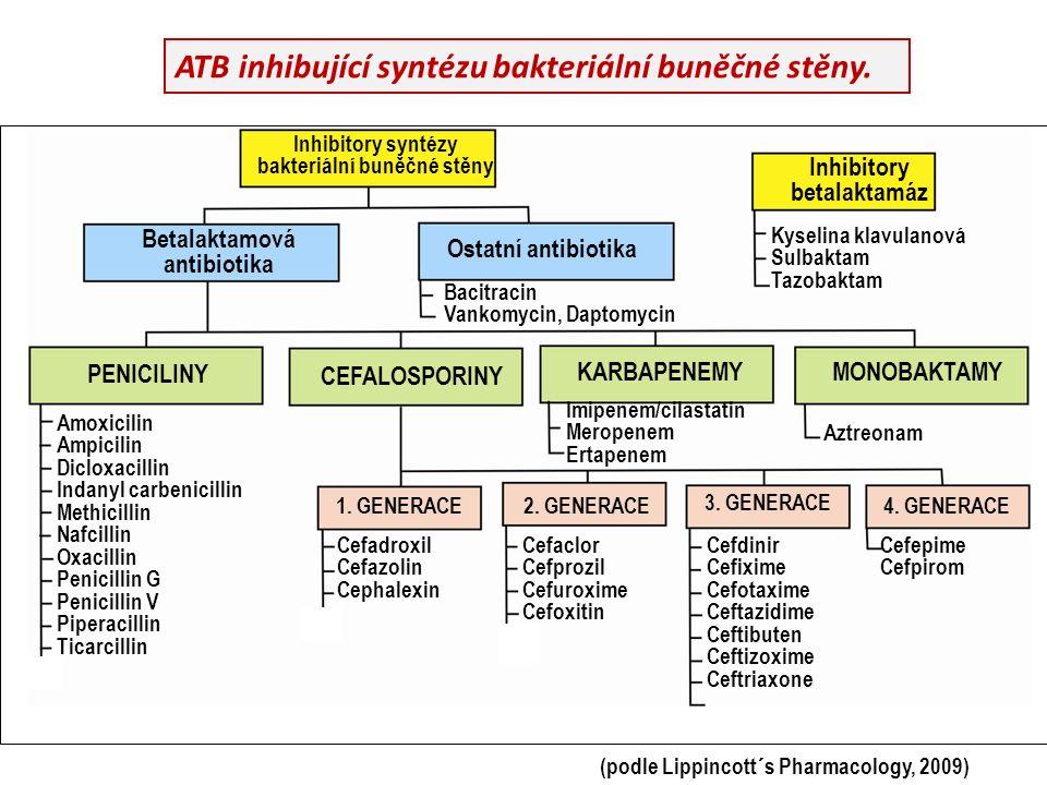 ATB inhibující syntézu bakteriální buněčné stěny. Inhibitory syntézy bakteriální buněčné stěny Inhibitory betalaktamáz Betalaktamová antibiotika Ostat
