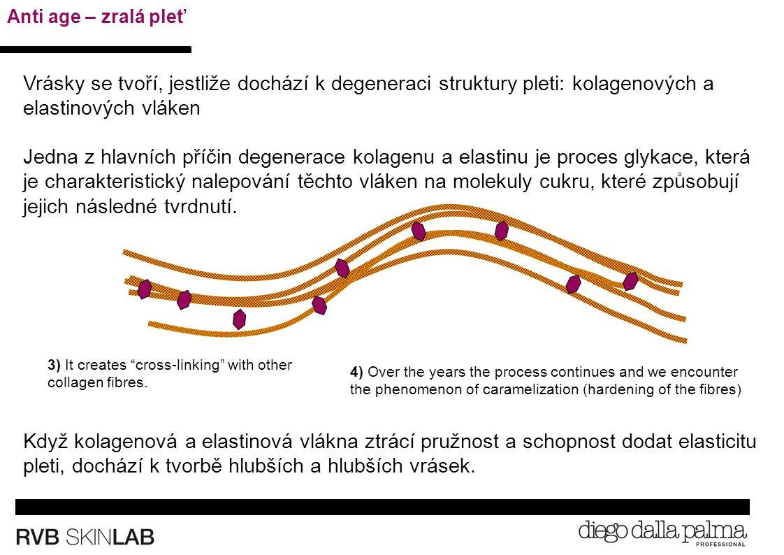 1) Singola fibra di collagene (flessibile e resistente) 3) It creates cross-linking with other collagen fibres.