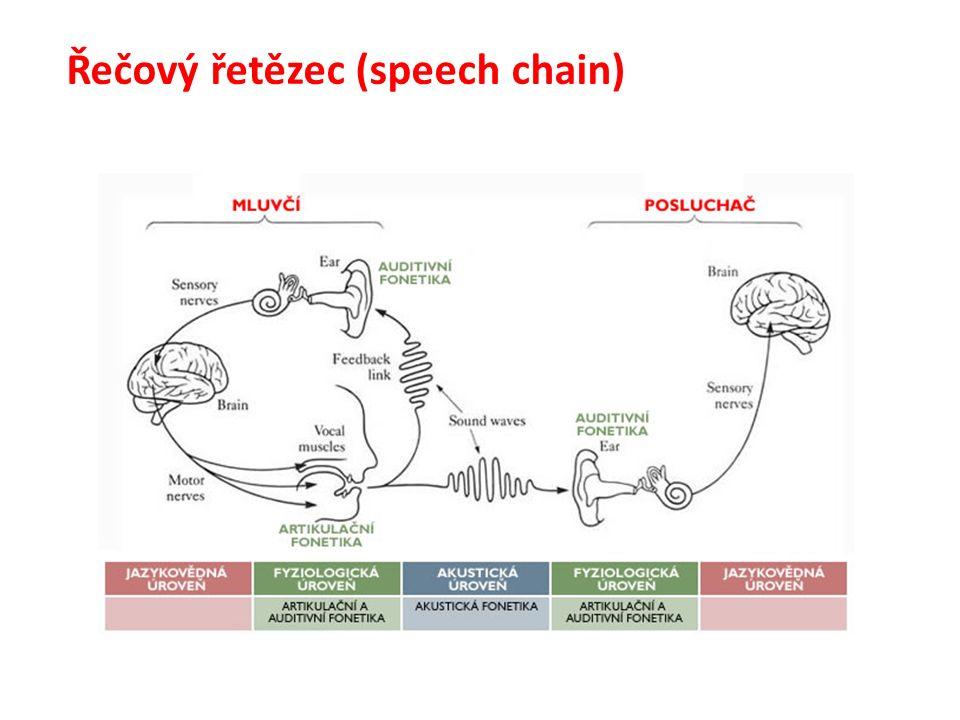 Řečový řetězec (speech chain)