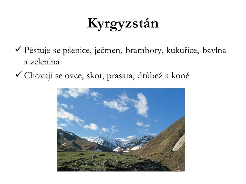 Kyrgyzstán Pěstuje se pšenice, ječmen, brambory, kukuřice, bavlna a zelenina Chovají se ovce, skot, prasata, drůbež a koně