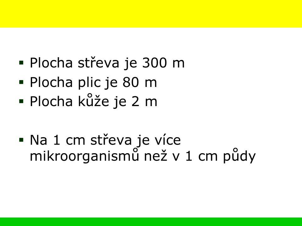  Plocha střeva je 300 m  Plocha plic je 80 m  Plocha kůže je 2 m  Na 1 cm střeva je více mikroorganismů než v 1 cm půdy