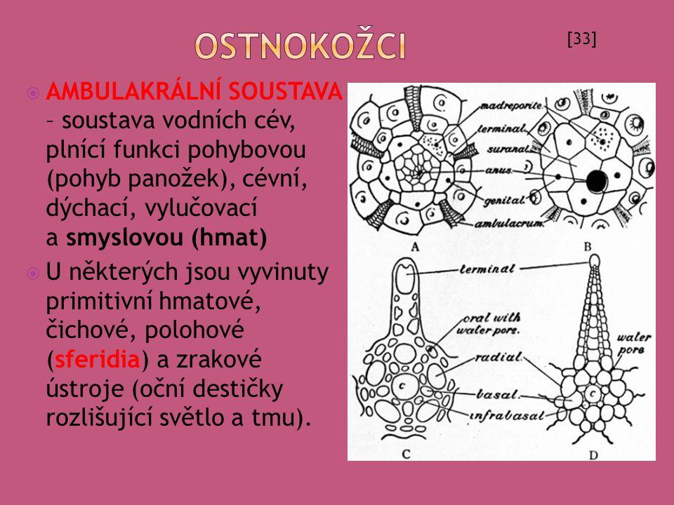  AMBULAKRÁLNÍ SOUSTAVA – soustava vodních cév, plnící funkci pohybovou (pohyb panožek), cévní, dýchací, vylučovací a smyslovou (hmat)  U některých j