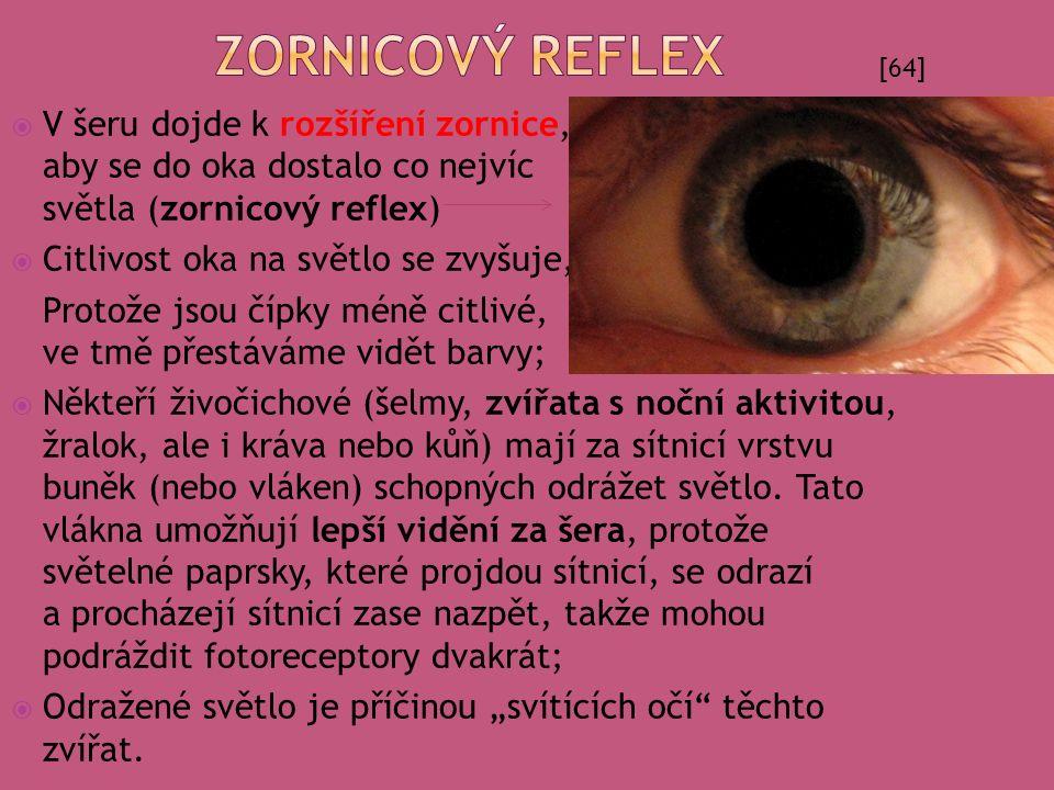  V šeru dojde k rozšíření zornice, aby se do oka dostalo co nejvíc světla (zornicový reflex)  Citlivost oka na světlo se zvyšuje, Protože jsou čípky