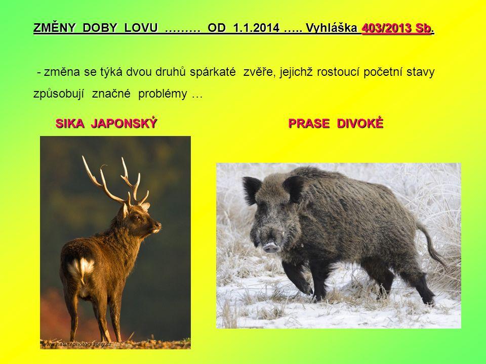 ZMĚNY DOBY LOVU ……… OD 1.1.2014 ….. Vyhláška 403/2013 Sb. - změna se týká dvou druhů spárkaté zvěře, jejichž rostoucí početní stavy způsobují značné p