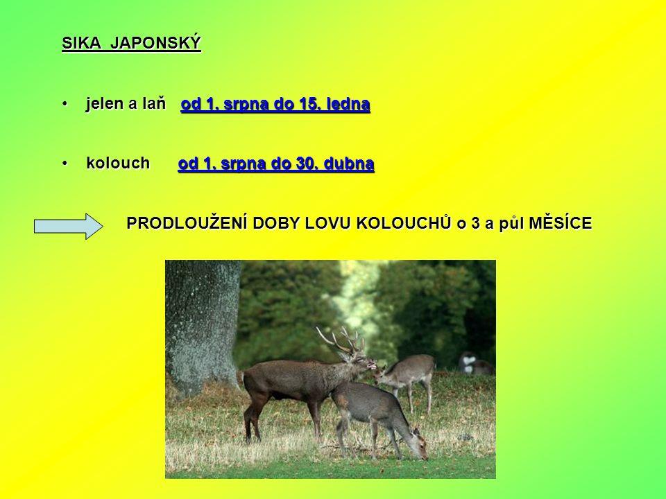 SIKA JAPONSKÝ jelen a laň od 1. srpna do 15. ledna jelen a laň od 1. srpna do 15. ledna kolouch od 1. srpna do 30. dubna kolouch od 1. srpna do 30. du