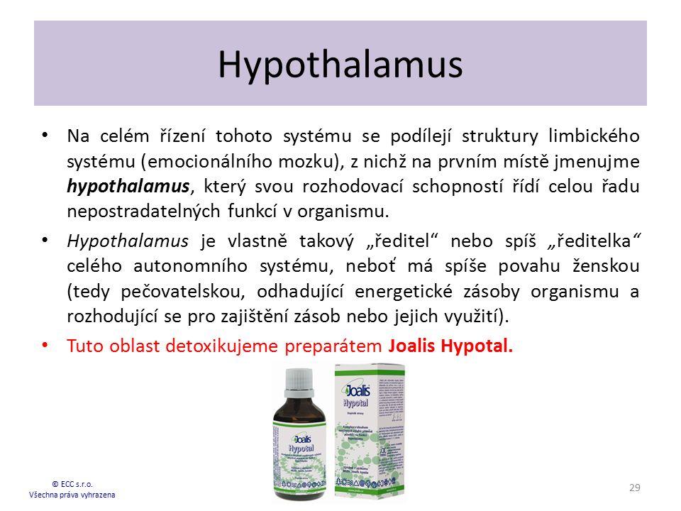 Hypothalamus Na celém řízení tohoto systému se podílejí struktury limbického systému (emocionálního mozku), z nichž na prvním místě jmenujme hypothala