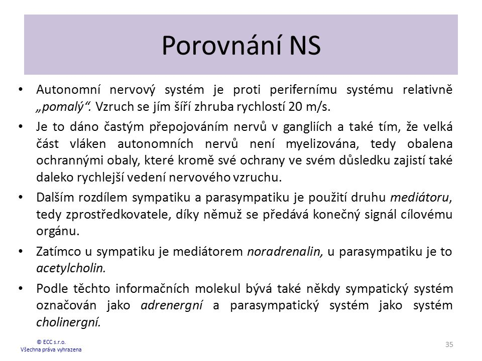 """Porovnání NS Autonomní nervový systém je proti perifernímu systému relativně """"pomalý"""". Vzruch se jím šíří zhruba rychlostí 20 m/s. Je to dáno častým p"""