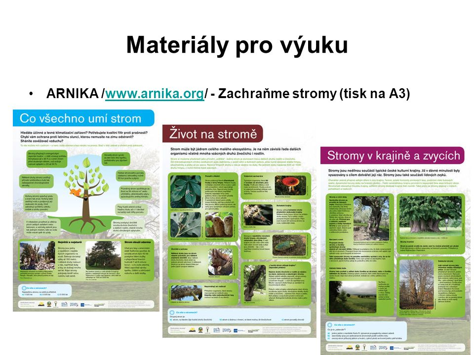 Materiály pro výuku ARNIKA /www.arnika.org/ - Zachraňme stromy (tisk na A3)www.arnika.org