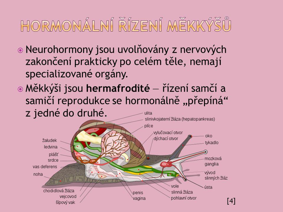  Neurohormony jsou uvolňovány z nervových zakončení prakticky po celém těle, nemají specializované orgány.